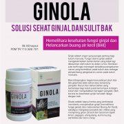 ginola-ginjal-sehat