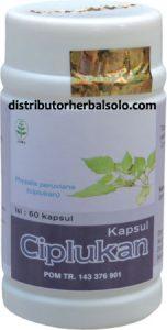 kapsul-herbal-ciplukan