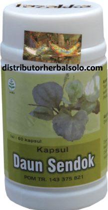 kapsul-herbal-daun-sendok